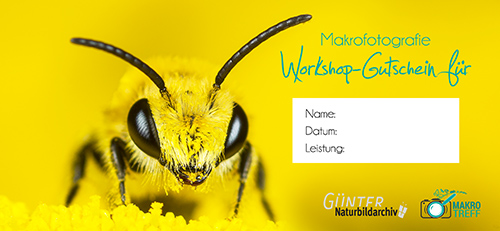 Makrofoto-Workshop Gutschein